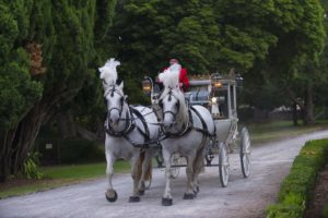 Horse and Carriage For Weddings